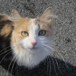 Wonderful, friendly kitty following me near Lisa + Shay in Dundalk